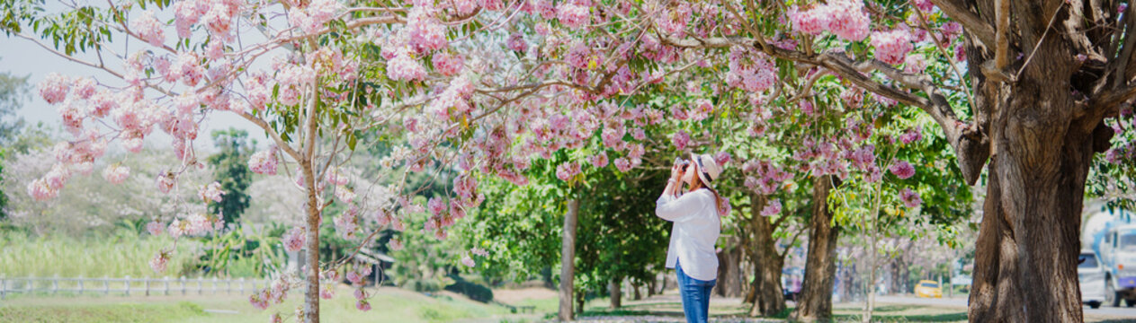 spring season with full bloom pink flower travel concept from beauty asian photographer woman enjoy with sight seeing and take photo  sakura or cherry blossom with soft focus flower background