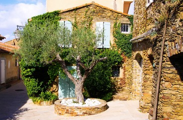 View on square with green olive tree and typical French mediterranean stone house covered with ivy in bright natural sun light - Gassin, Cote d´Azur, France
