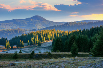 beautiful mountain landscape at sunrise in autumn. coniferous forest on the hills. frosty and sunny morning in apuseni natural park, romania