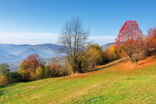 sunny forenoon in mountainous rural area. wonderful countryside autumn landscape. trees in colorful foliage on the grassy slope. distant ridge in haze