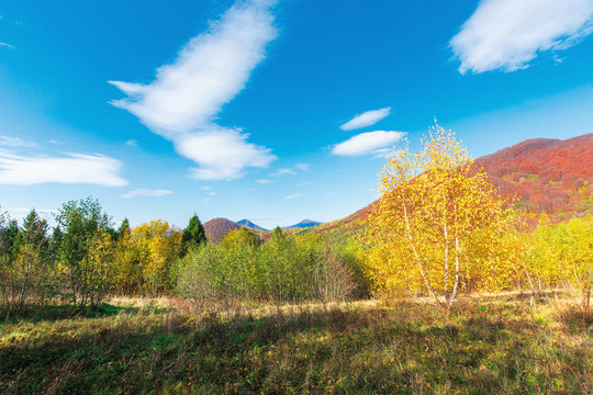 wonderful landscape in autumn. birch trees in yellow foliage. distant mountain in fall colors. sunny weather with fluffy clouds on the blue sky