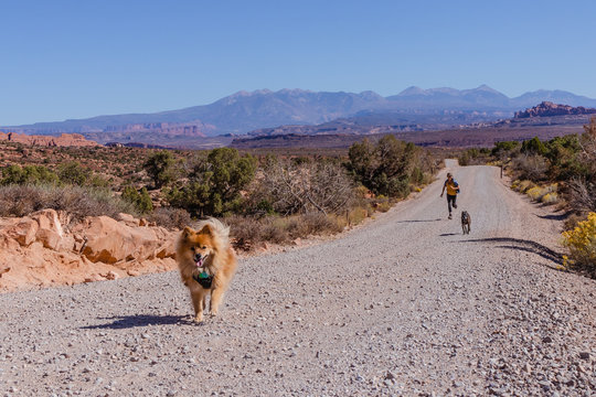 Woman running with dogs on a desert road