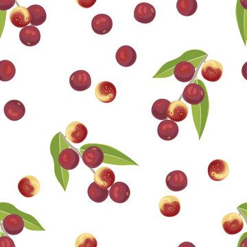 Camu camu berry fruits seamless pattern on white background. Vector illustration of branch with red healthy berries Myrciaria dubia and green leaves. Super food  in cartoon simple flat style.
