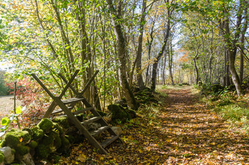 Wooden stile crossing a mossy stone wall by a trail in fall season
