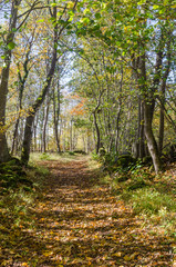 Trail through a bright deciduous forest by fall season