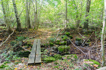 Wooden footbridge by a trail in a deciduous forest