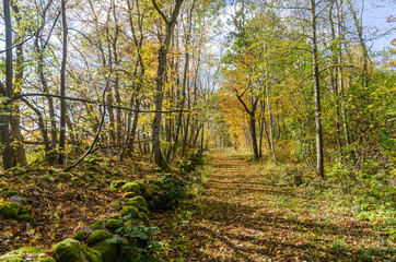 Bright footpath with fall colors in a deciduous forest