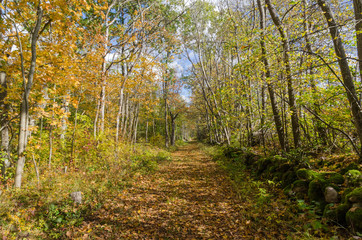 Beautiful trail in golden fall colors in a deciduous forest