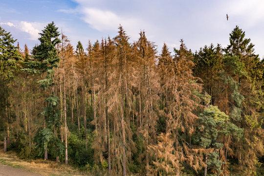 Luftaufnahme Fichtensterben durch den Klimawandel im deutschen Harz