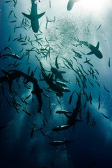 Garden Poster Coral reefs sharks