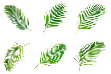 Photo sur Aluminium Palmier Collection of palm leaves isolated on white background.