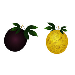 Purple and Yellow Passion Fruits - Cartoon Vector Image