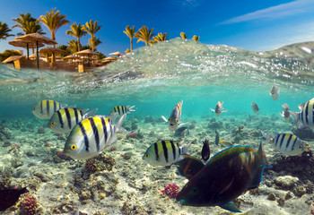 Underwater Scene With Reef And Tropical Fish
