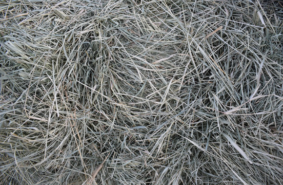 texture of bermuda hay at the end of a bale