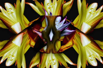 Efecto caleidoscopio con motivos florales en fondo negro.