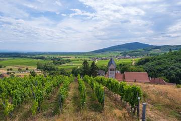 Blick auf die Weinberge von Itterswiller/Frankreich im Elsass