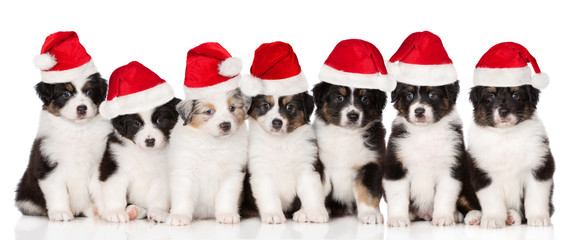 group of puppies in santa hats on white background