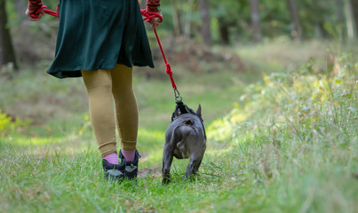 A dog is kept on a leash. Concept: dog training