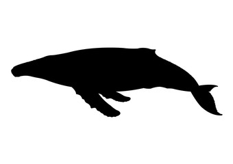 Whale silhouette vector illustration isolated