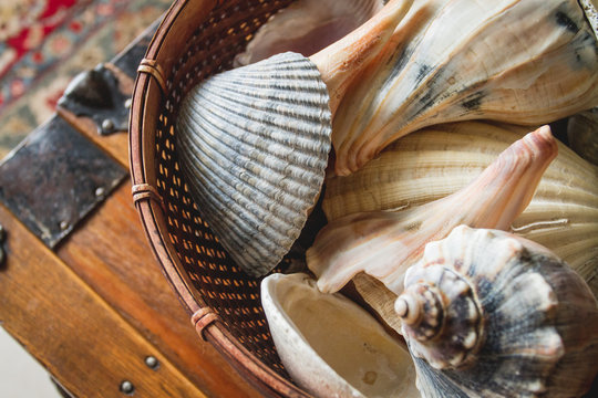Close up macro detail of a decorative wicker basket of sea shells on end table, a decoration for beach house motif of summer rental investment vacation property interior design