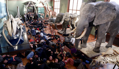 Climate change activists stage a die-in protest at the Natural History Museum in Vienna