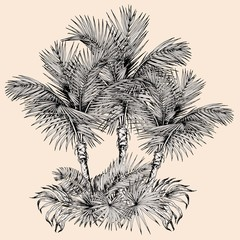 Tropical card with sketchy palm trees and leaves. Oasis scenery. Hand drawn vector illustration isolated on beige background.