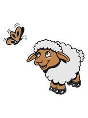 Schaf Weide fressen freundlich grashalm Herde süß lieb Wolle pulli Nutztier grasen lamm schmetterling 3c