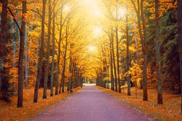Autumn view of an oak alley with bright light above the crowns a footpath and benches.
