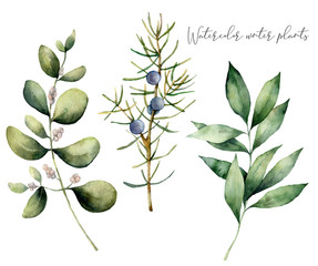 Watercolor juniper and eucalyptus set. Hand painted winter plants with branches and berries isolated on white background. Floral illustration for design, print, fabric or background.