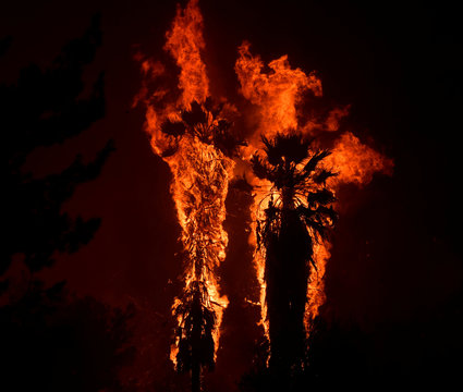 Palm trees explode into flames from a wind-driven wildfire called the Saddle Ridge fire in the early morning hours Friday in Porter Ranch