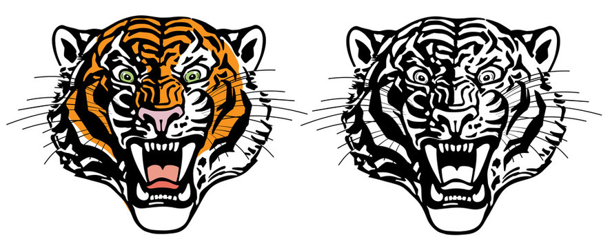 head of roaring tiger. Angry big cat. Front view. Color and Black White tattoo style vector illustration