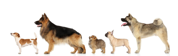 Dogs in standing