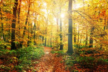 bunter Herbstwald mit Waldweg im Sonnenlicht