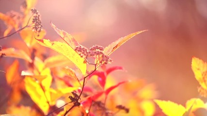 Fotoväggar - Autumn Landscape, Leaves swinging in a tree in autumnal Park. Fall. Autumn leaf, bright colors. Autumn colorful park. Slow Motion Ultra high definition 3840X2160 4K UHD video footage