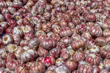 Very colorful red garlic bunches close up