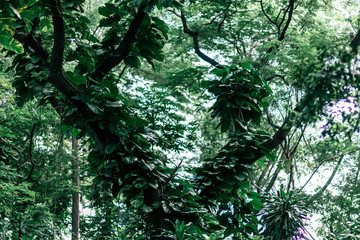 Horizontal shot of green foliage in the daytime. Tropical rainforests make up one of Earth's largest biomes and contain a diverse array of vegetation and other life. Nature and plants concept. Wall mural