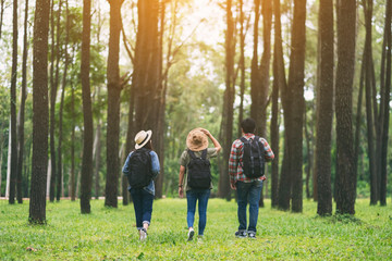 Obraz A group of travelers walking and looking into a beautiful pine woods - fototapety do salonu