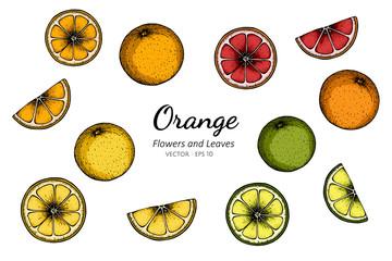 Collection set of orange drawing illustration.