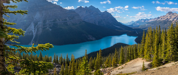 Aluminium Prints Canada Gorgeous Peyto Lake Panorama