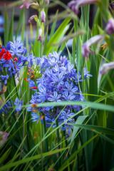 fiori, colore, profumo,