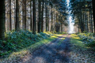 Ballade dans les bois