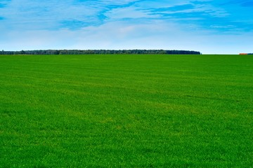 Wall Murals Green agricultural landscape of the green field against the background of the blue sky