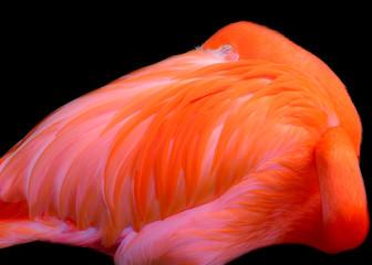 Flamingo Pink Sunrise