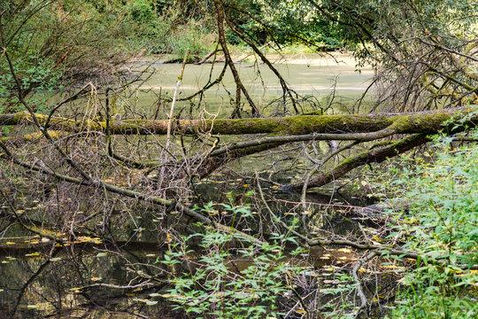 Toter Baum an einem Bannwald Biotop in Deutschland