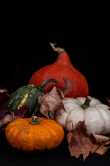 Colorful pumpkins in fall