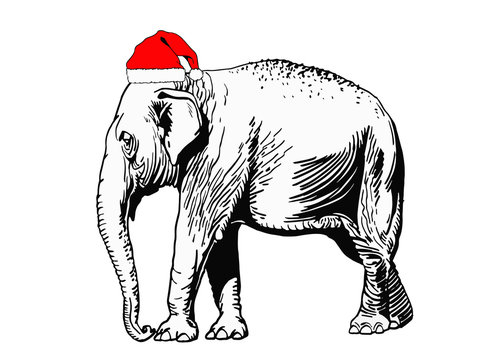 Graphical elephant in Santa Claus hat isolated on white background,vector new year illustration