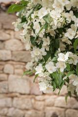 White jasmine flowers on brick wall background