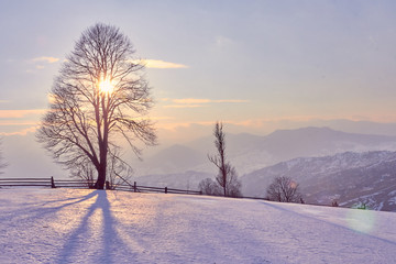 winter landscape sunrise in the snowy mountains and a tree on a slope