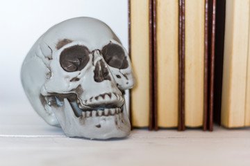 Skull and