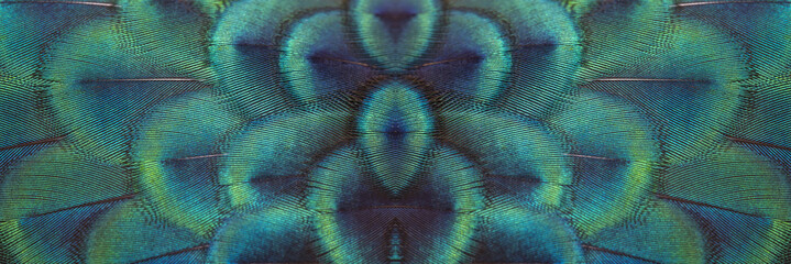 Papiers peints Paon Closeup peacock feathers for beautiful background
